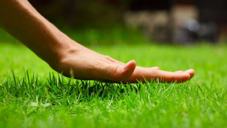 Hand touching grass