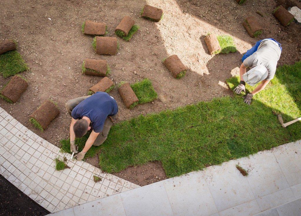 Gardener Installing Natural Grass Turfs